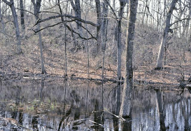 Ephemeral wetland in southeast Wisconsin. Eric Epstein