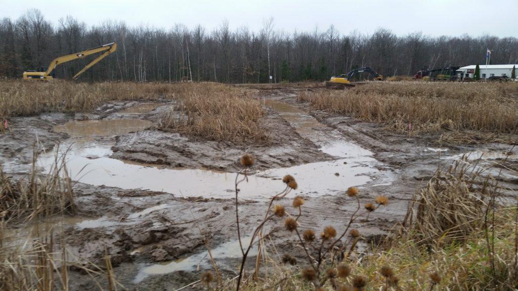 wetland impact