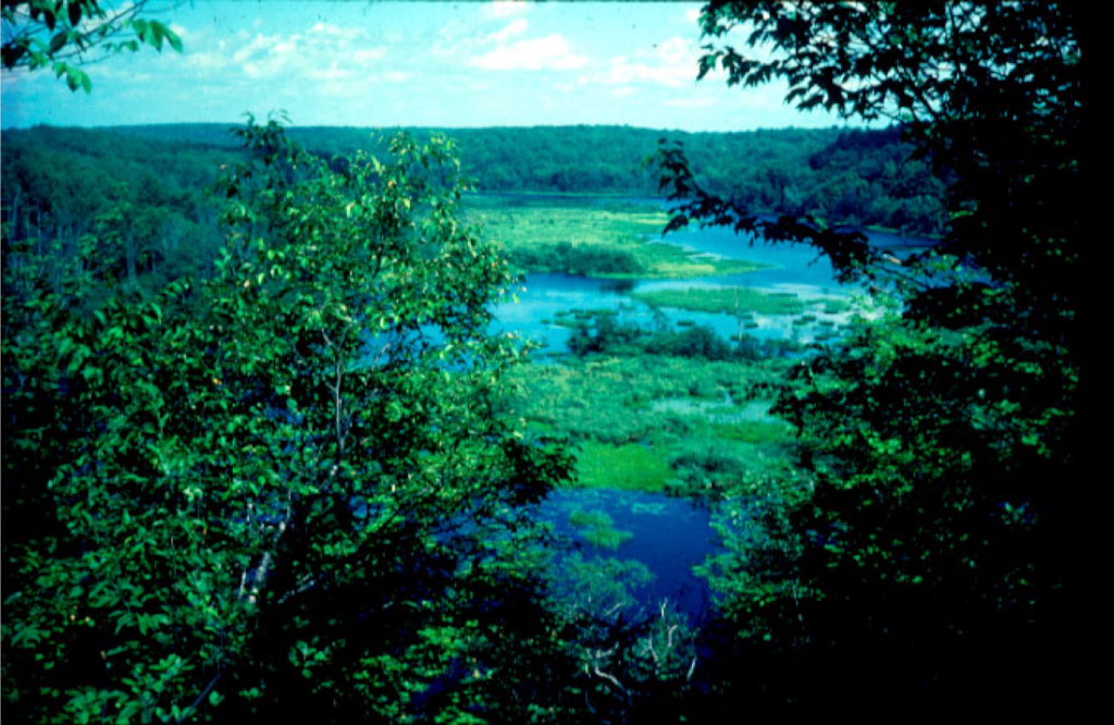 Beaver Dam Lake, Ashland County.   Photo: Don Waller